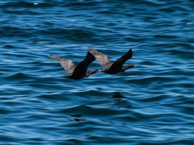 Climate change threatening Peel waterways, putting humans & wildlife at risk