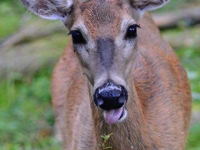 Deer's death prompts 760-name petition demanding enforcement of leash rules at Rattray Marsh