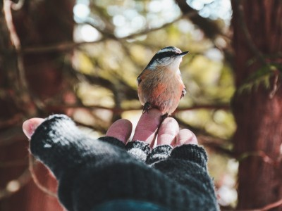 'You don't think of protecting something you don't love': reconnecting with nature could trigger a wider movement