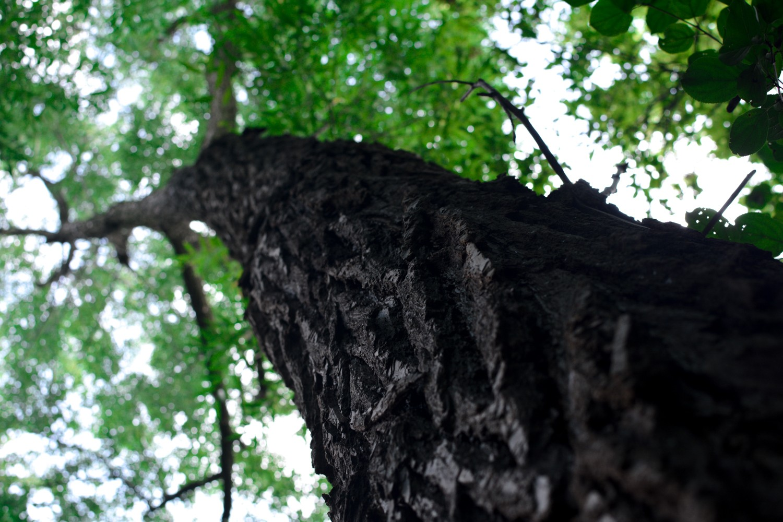 Greenbelt Foundation sets its sights on Peel's lack of trees