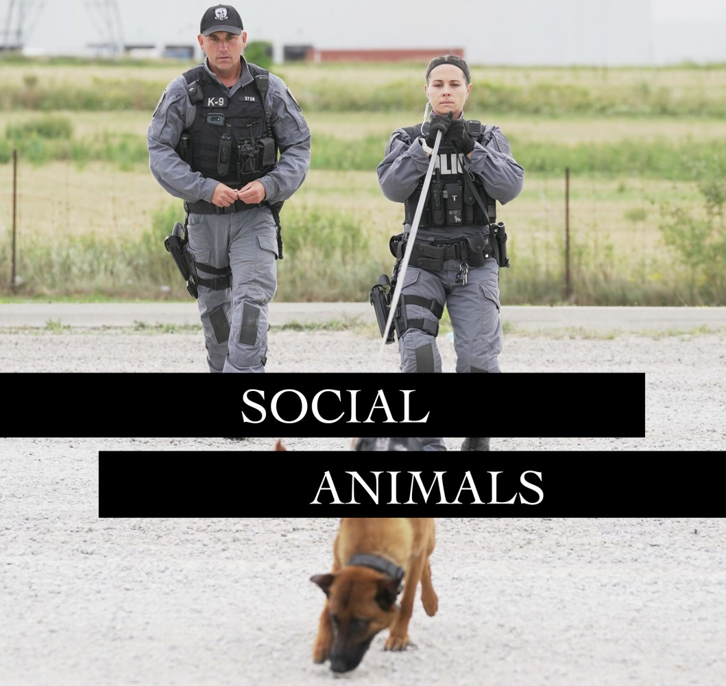 Peel's K9 unit has a social media style police forces should learn from