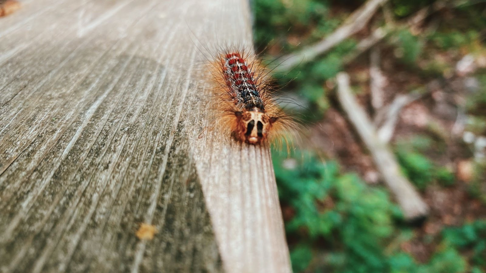 The very hungry caterpillars crawling all over Mississauga