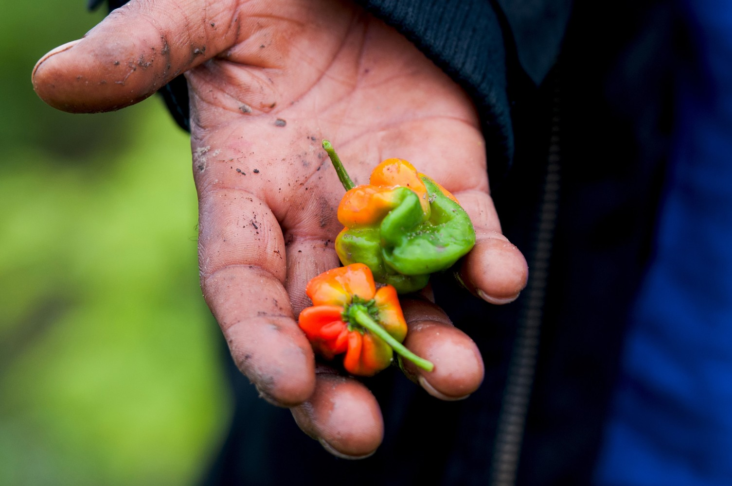 Want to avoid those long lines for food? Why not grow your own